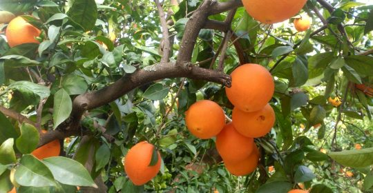 Capacidad antioxidante de la Vitamina C